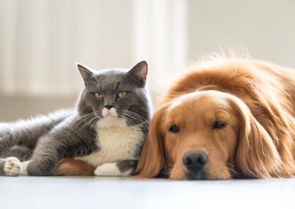 cat and dog allergies istockphoto 577960242 jpg