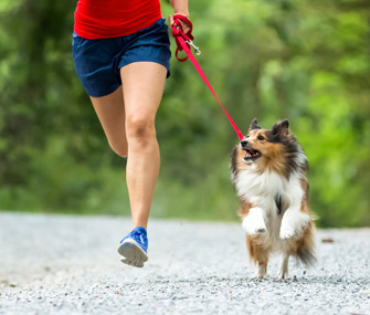 Jogging with Sheltie