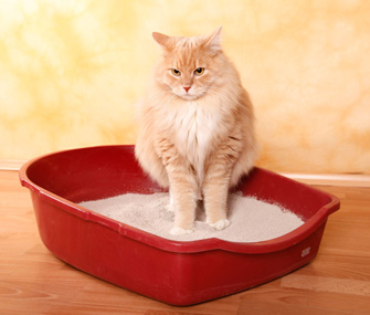 Cat using litterbox
