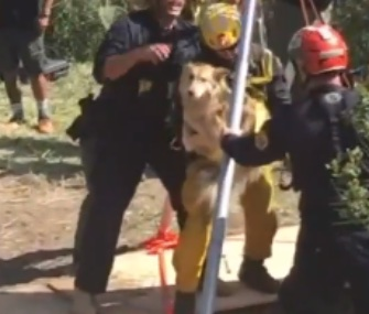 Firefighters used a rope system to pull Lucy safely from a 30-foot well near Malibu.