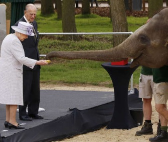 Queen Elizabeth fed Donna the Asian elephant at the Whipsnade Zoo.