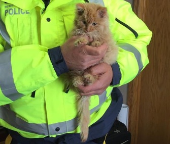 Ambrose the kitten was rescued from a highway in Canada by two police officers.