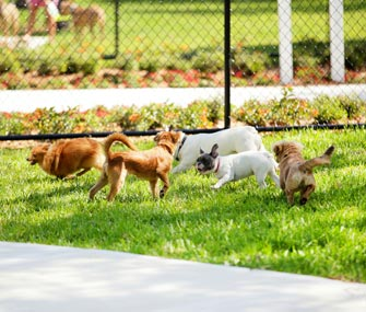 Small dogs at dog park