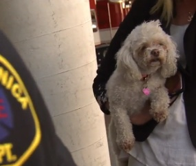 Santa Monica firefighters gave Nalu CPR for 20 minutes to save the dog's life.