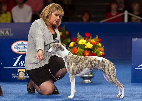 National Dog Show 2011...
