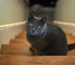 Senior cat at top of staircase