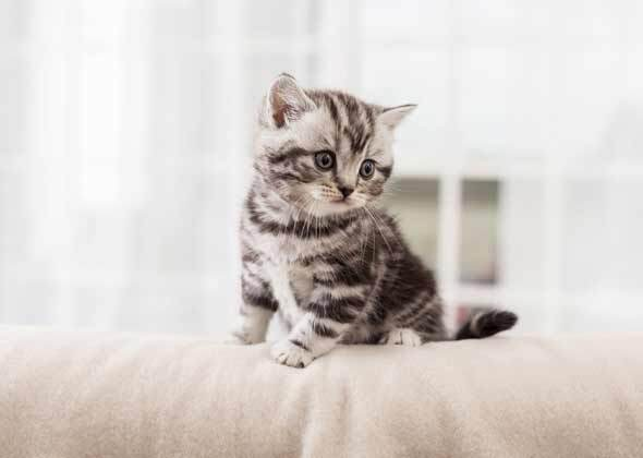 cute kitten names the most popular male and female kitten names of 2014