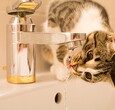 Cat Drinking From Sink