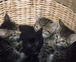 Rehome Scam Kittens