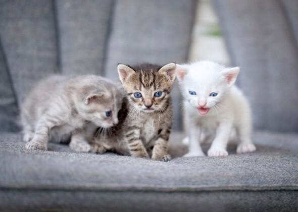 N Cat Names The Most Trendy Cat Na...