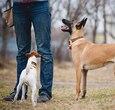 狗喜欢被爱抚