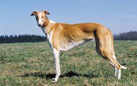 Chart Polski dog