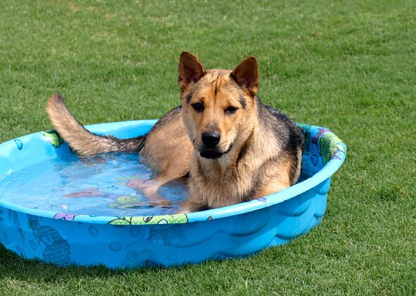 Dog sitting in kid pool