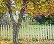 Yard in the fall