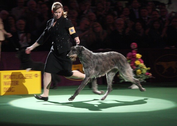 National Dog Show Owner From Pennsylvania