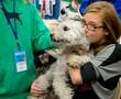 Pumi dog at AKC Meet the Breeds