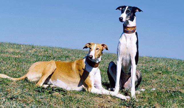 Chart Polski dogs