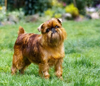 What Are The Maun Breeds Of Dogs