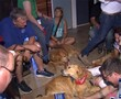 Comfort dogs head to Orlando