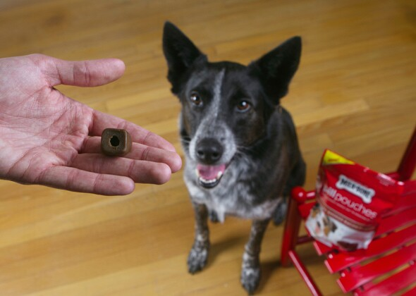 How To Mask Dog Pill In Food