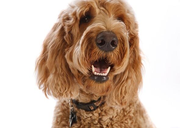 The 20 Hottest Dog Breeds