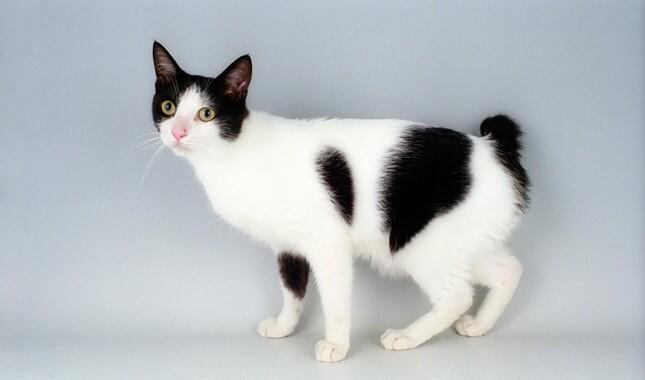 cat tongue groomer