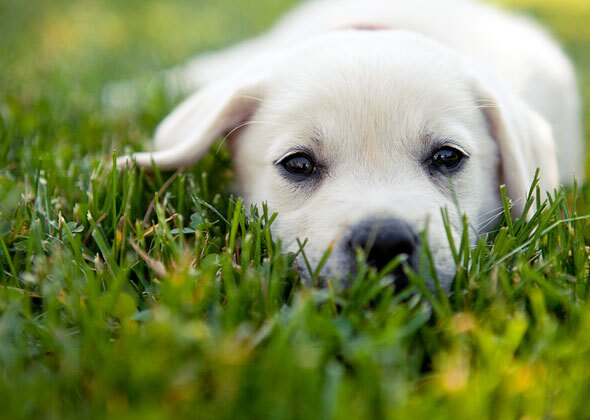 How to Choose a Puppy Who's Right for You Pictures Of Puppies