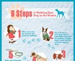 Walking Your Dog in the Winter