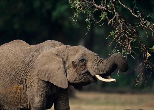 N F Elephant 2 You Won't Believe How ...