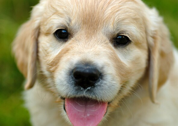 The Most Popular Male And Female Puppy Names Of 2015