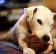 狗的咀嚼玩具