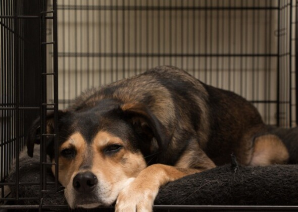 How To Prepare For A New Dog In Your Home