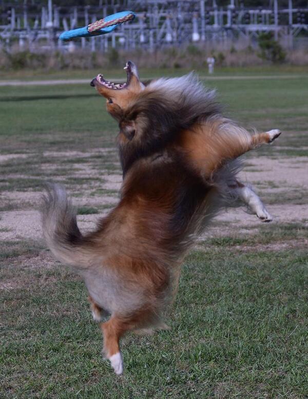 ashton catching his frisbee
