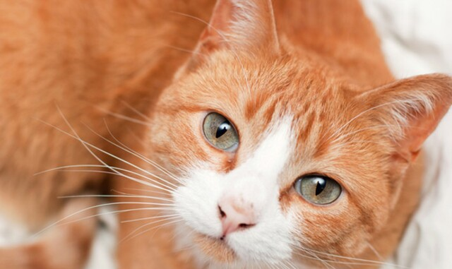 5 Ways To Take Great Photos Of Your Cat