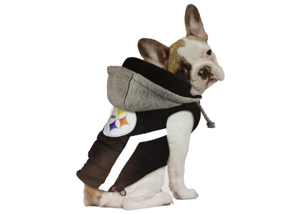 Splurge On Your Pet With These 10 Products From Global Pet