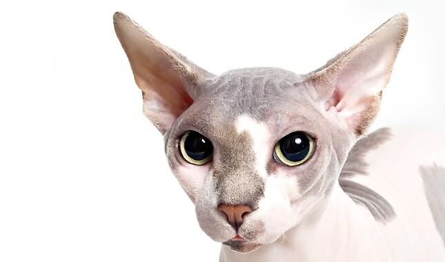 top cat episode