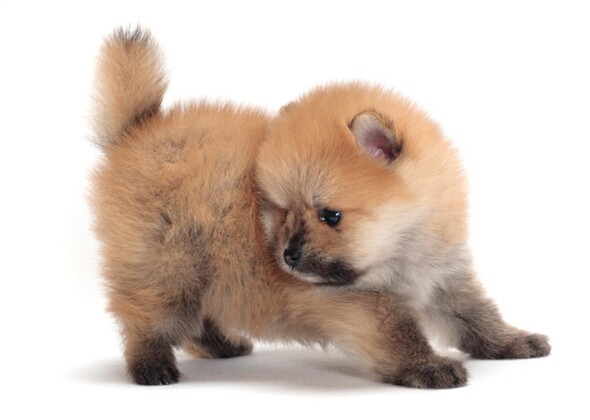 What Are The Best Dogs For First Time Owners Vets Place Their Votes