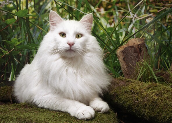 10 Cats And Dogs With Magical Origins