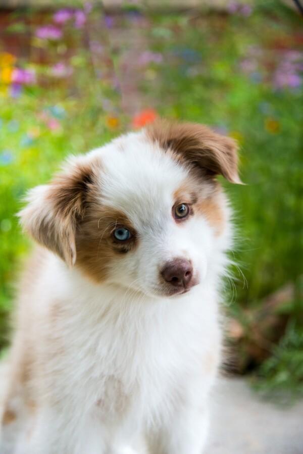 cute pet photo contest past winners