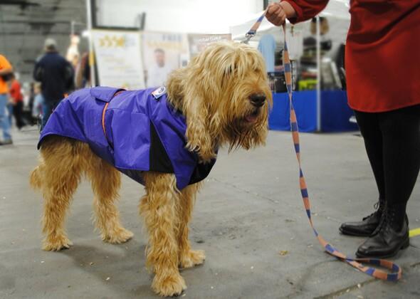 National Dog Show Otterhound