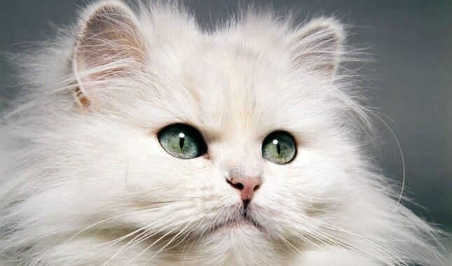 induce vomiting in cat