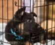 German Shepherd puppy in crate