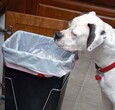Dog sticking nose in trash