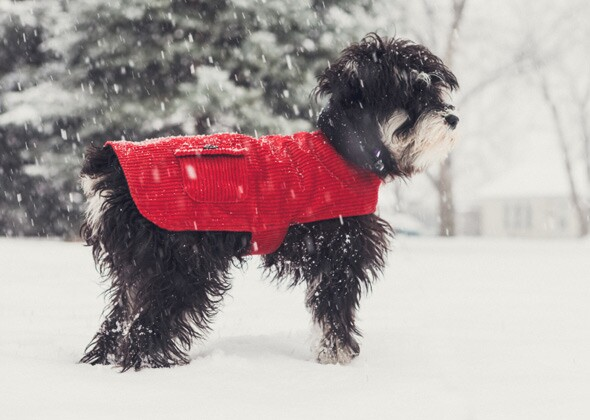 Teach Your Puppy To Potty In The Snow