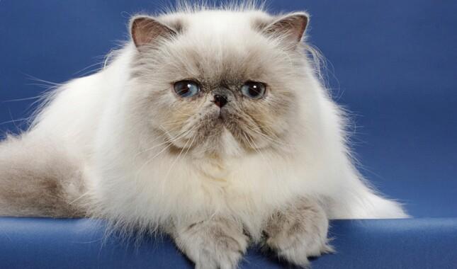 a stray cat named bob