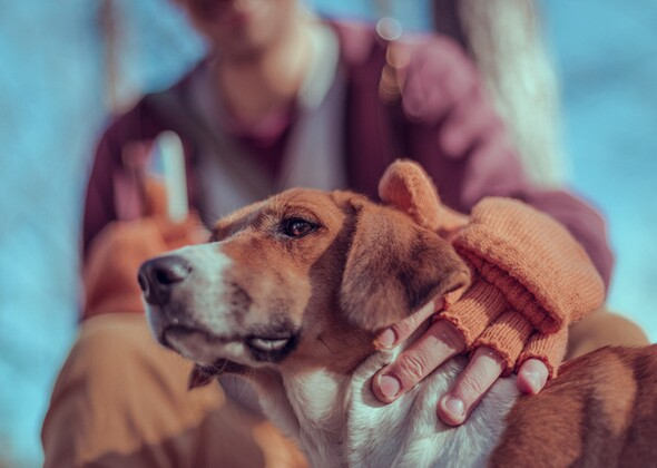 Adding a Second Dog to Your Family? What You Should Know