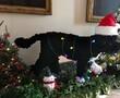 Bo Obama Christmas