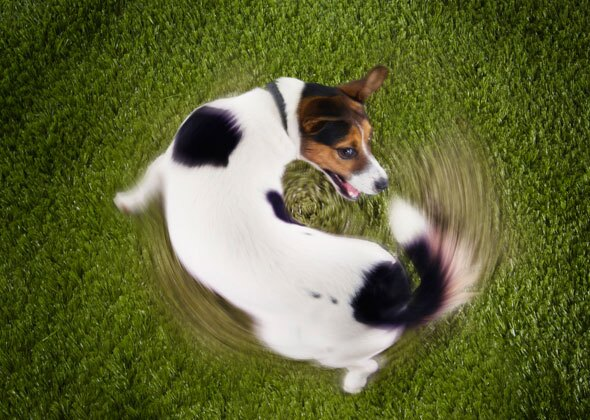 10 Strange Dog Behaviors Explained