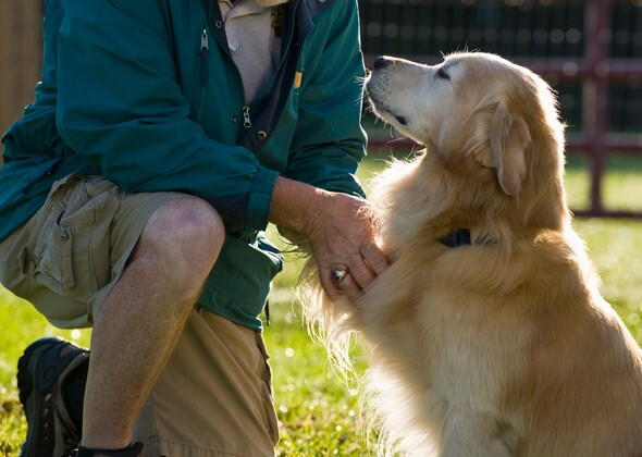 what everyone should know about petting a dog