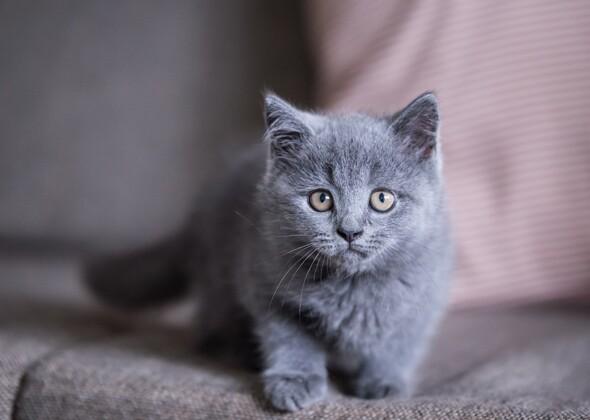 N Cat Names Most Popular Kitten Na...